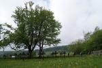 DSC05073.jpg - miniatura z galerii zdjęć (otwórz zdjęcie w powiększonej wersji)
