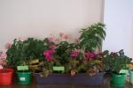 Konkursowe kwiaty - miniatura z galerii zdjęć (otwórz zdjęcie w powiększonej wersji)