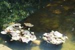 DSC08268.jpg - miniatura z galerii zdjęć (otwórz zdjęcie w powiększonej wersji)