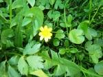 Wiosenne kwiaty 1.jpg - miniatura z galerii zdjęć (otwórz zdjęcie w powiększonej wersji)